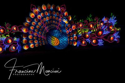 2018  SONY lanterns_119