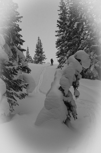 Backcountry ski trip to Fowler Hillard hut.