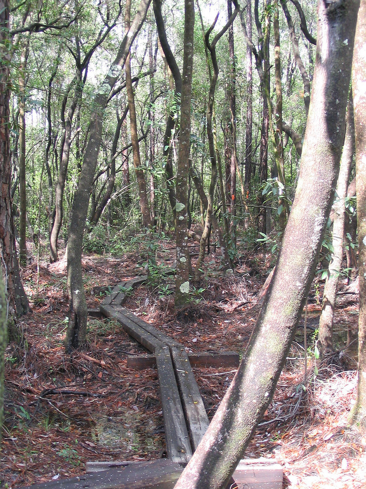 Boardwalk on Juniper Creek Trail<br /> PHOTO CREDIT: Linda Benton/Florida Trail Association