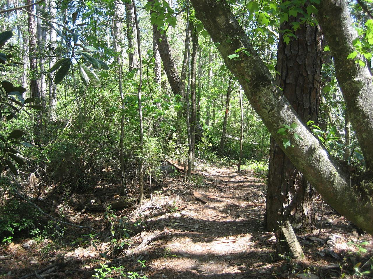 Along the Juniper Creek Trail<br /> PHOTO CREDIT: Sandra Friend / Florida Trail Association