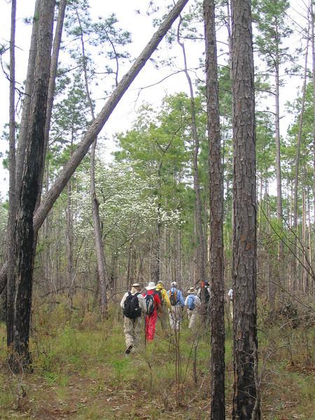 Blackwater River State Forest<br /> PHOTO CREDIT: Linda Benton/Florida Trail Association