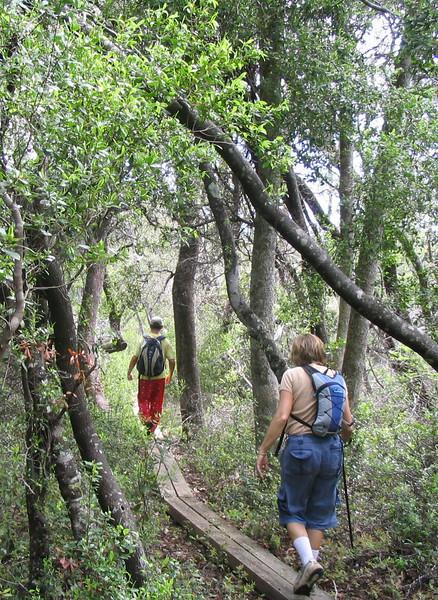 Boardwalk near Dean Creek<br /> PHOTO CREDIT: Linda Benton/Florida Trail Association