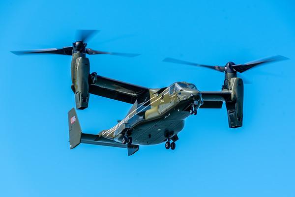 Osprey #8