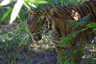 Safari Park - Nov 2014