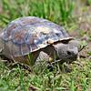 5D_turtle_3067