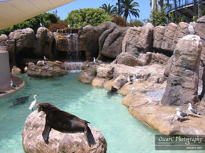 Sea Lion Exhibit