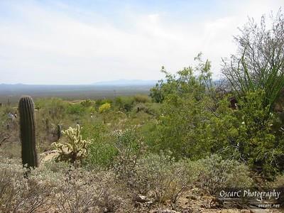 The Verdant Desert