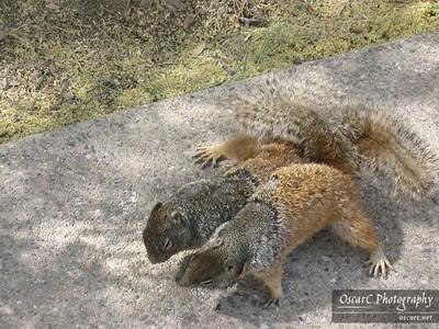 Squirrel Biology