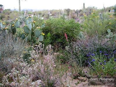 Desert, or Garden?