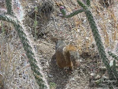 Cactus and Squirrel
