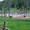 RM_4599 Bison in Lower Geyser Basin