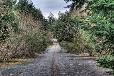"Forgotten Road - Vancouver Island BC Canada Visit our blog ""Detour Ahead"" for the story behind the photos."