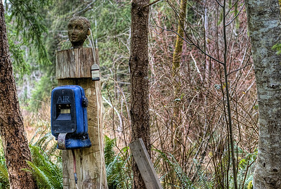 "The Wacky Woods - Fanny Bay, BC, Canada Visit our blog ""Wrong Way"" for the story behind the photos."