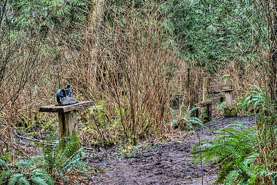 """The Wacky Woods - Fanny Bay, BC, Canada Visit our blog """"Hidden Gems Along A Muddy Path"""" for the story behind the photos."""