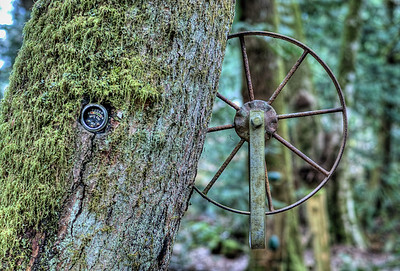 The Wacky Woods - Fanny Bay, BC, Canada - George Sawchuk: Outdoor Art Exhibit