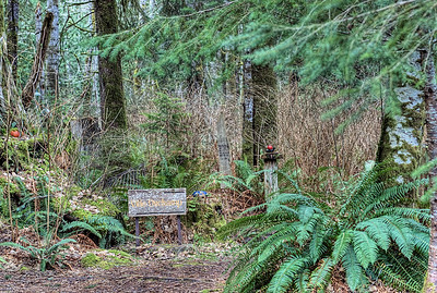 "The Wacky Woods - Fanny Bay, BC, Canada Visit our blog ""Hidden Gems Along A Muddy Path"" for the story behind the photos."