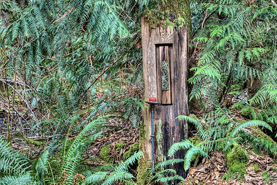 "The Wacky Woods - Fanny Bay, BC, Canada George Sawchuk: Outdoor Art Exhibit Visit our blog ""George Sawchuk's Wacky Woods – In Memory"" to read the story behind the photos."
