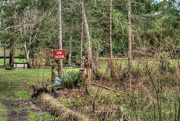 The Wacky Woods - Fanny Bay, BC, Canada