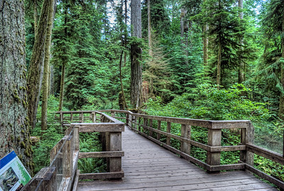 "MacMillan Provincial Park (Cathedral Grove) - Vancouver Island, BC, Canada Visit our blog ""Old Growth: Cathedral Grove"" for the story behind the photos."