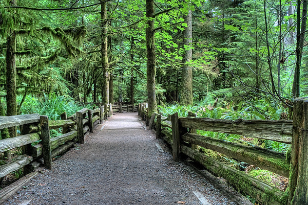 MacMillan Provincial Park (Cathedral Grove) - Vancouver Island, BC, Canada