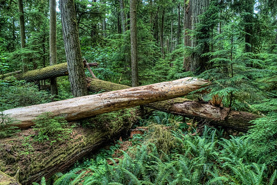 """MacMillan Provincial Park (Cathedral Grove) - Vancouver Island, BC, Canada Visit our blog """"Old Growth: Cathedral Grove"""" for the story behind the photos."""
