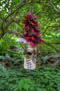 """Milner Gardens and Woodland - Parksville/Qualicum Beach, Vancouver Island, BC, Canada Visit our blog """"Magical Moments"""" for the story behind the photo."""
