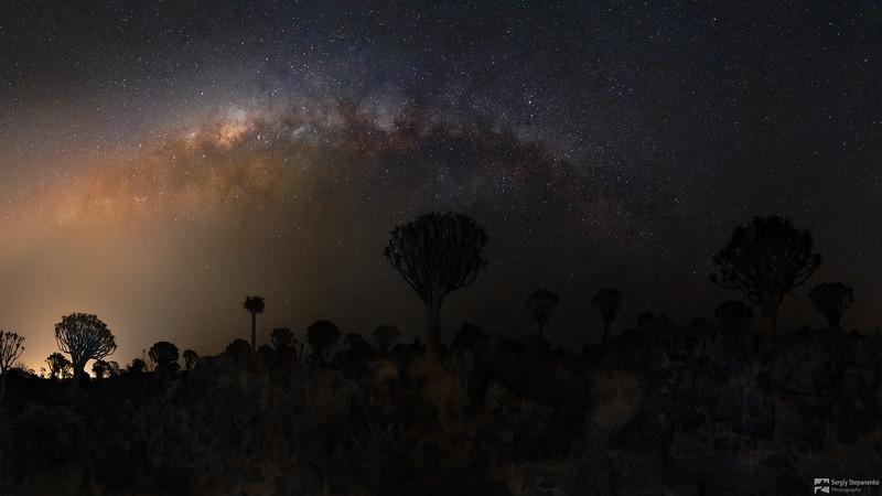 Quivertree Forest Night | Ночь в алоевом лесу