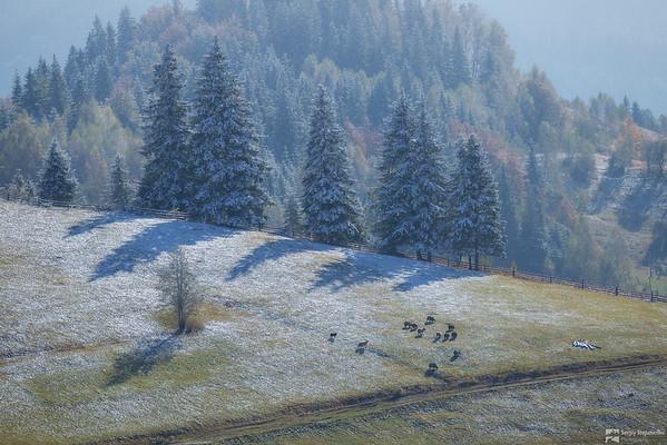 Carpathian Fairy Tale | Карпатская сказка