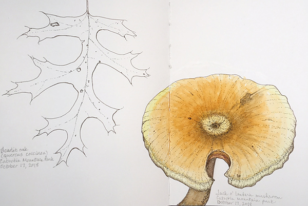 "Nature Journal From September 2017 to date <a href=""/Art-Galleries/Field-Sketchbook/"">View scans</a>  <i>Pages from my Perpetual Nature Journal <br>Sketches from life, either <i>en plein aire</i> or from specimens I can take home (responsibly) </i> <p></p> <hr>"