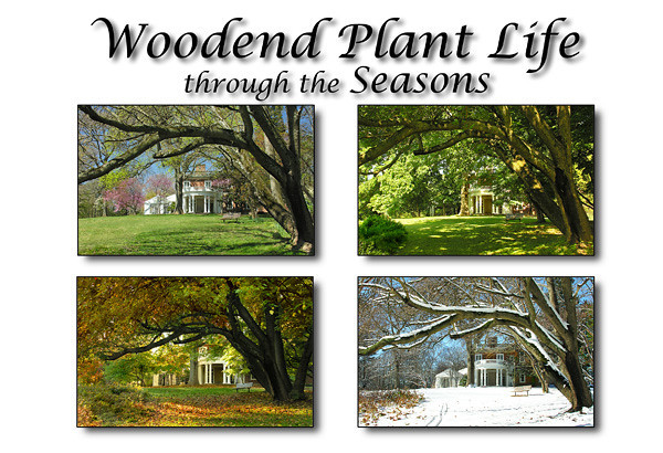 "Woodend Plant Life - through the Seasons <br>July 24, 2011 (1st edition) <br><a href=""/ANS/Woodend-Grounds/Woodend-Plant-Life/18183867_fw4Q9K"">View book</a> <br> <i>A volunteer project for the <a href=""http://www.anshome.org"" target=""_blank"">Audubon Naturalist Society</a> <br>Photos collected 2007-2011</i> <p> </p><hr>"