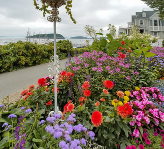 Summer flowers of Bar Harbor, Maine.