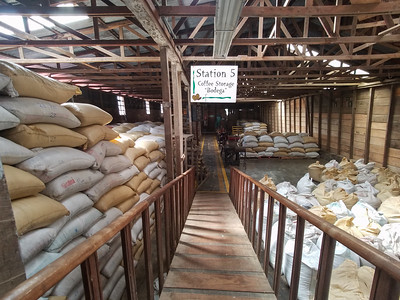 Coffee bagged for storage at Doka Plantation.