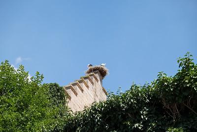 Storks nesting atop a building in Rothenburg ob der Tauber, Germany.