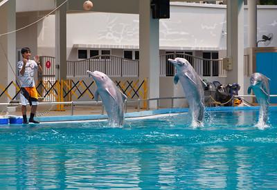 A Dolphin Show at the Aquarium on Sentosa Island, Singapore.
