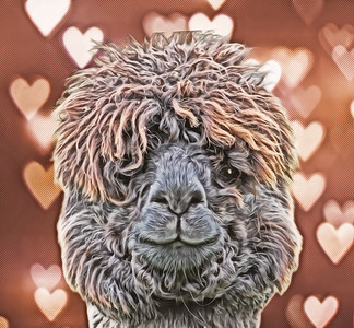 The Love Alpaca
