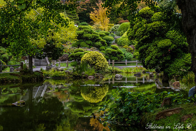 The beautiful grounds of the San Francisco Japanese Tea Gardens are simply serene.  These gardens are as peaceful as they are beautiful.  I could spend all day in this lovely garden.