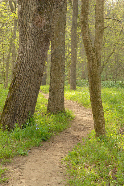 Woods trail, near Narrows covered bridge.