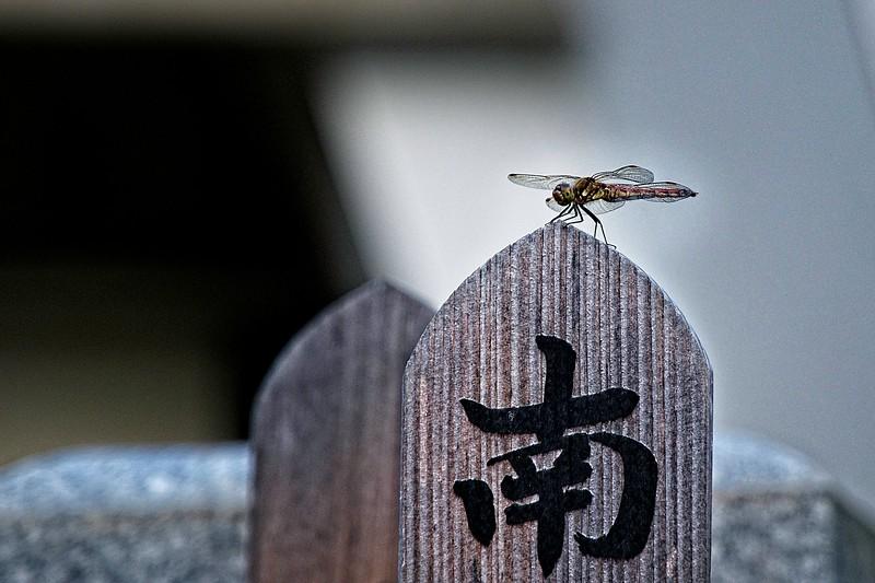 Tokyo, Japan - 2019