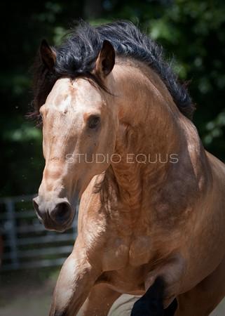 Sale Horses 6.2.10
