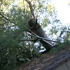 SM-08 cabin tree roof 2