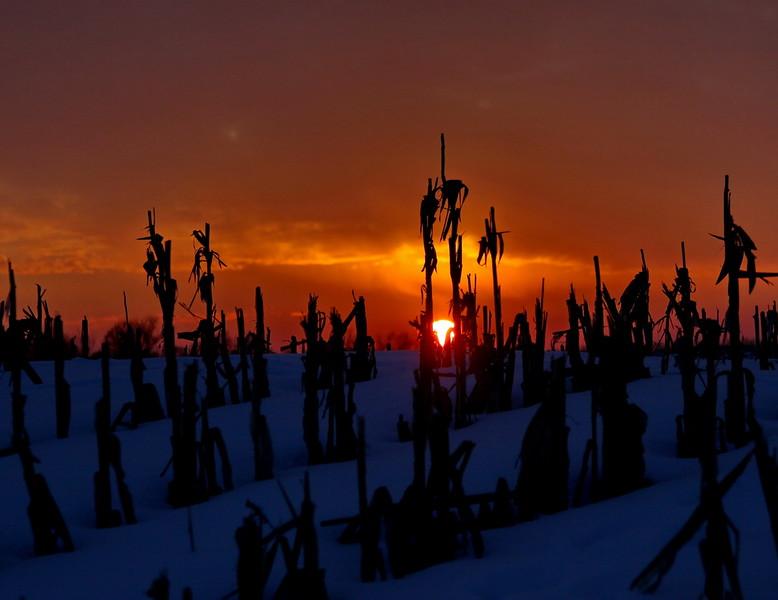 2January_2971x_sunset_cornstalks_sm