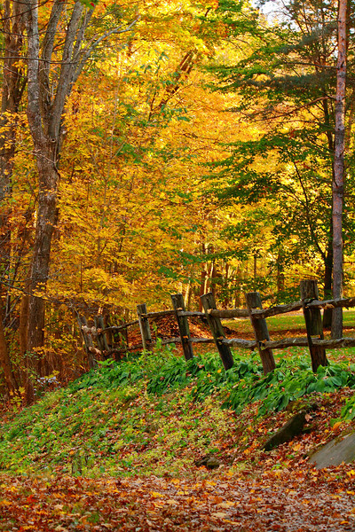 Leading to the Colors of Fall!<br /> <br /> © 2010 Paul L. Csizmadia  All Rights Reserved  No Use Allowed without Permission