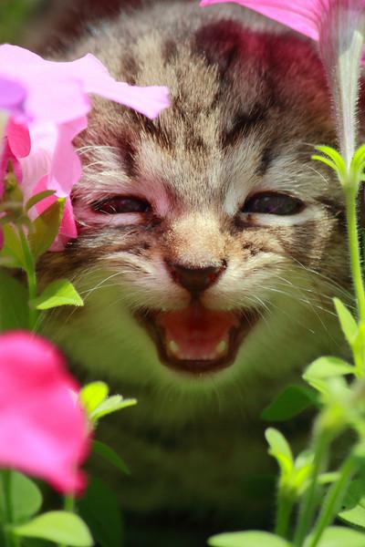 Candid Kitty!
