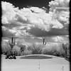 Desert Golf Day