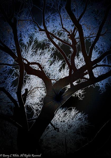 Palo Verde Glow