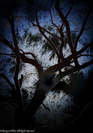 Week 38: Single Subject - Palo Verde Tree