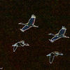 Snow Geese and Sandhill Cranes (6169_5942)