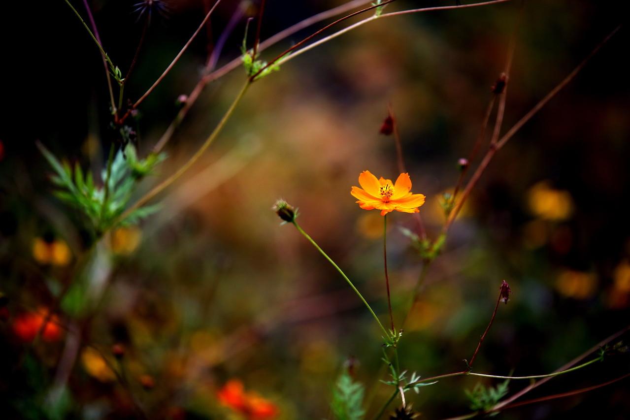 EZ7A7650_yellow_flower