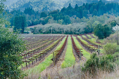 Vineyard, Jack London SHP