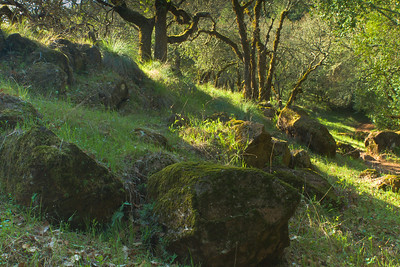 On the Trail, Annadel State Park